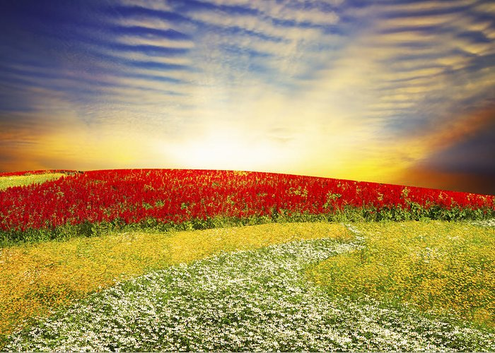 Background Greeting Card featuring the photograph Floral Field On Sunset by Setsiri Silapasuwanchai