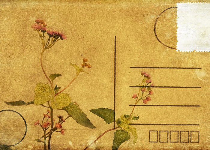 Address Greeting Card featuring the photograph Floral Pattern On Postcard by Setsiri Silapasuwanchai