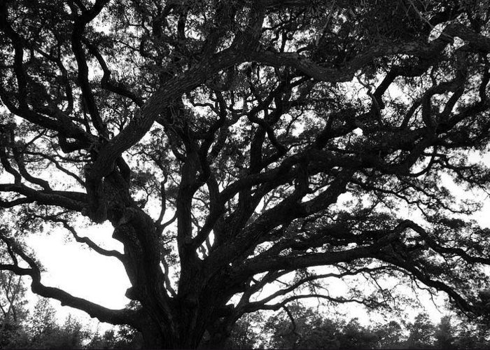 Greeting Card featuring the photograph Florida Tree by Christy Phillips