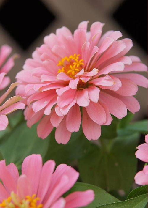 Pink Flower Greeting Card featuring the photograph Flower by Megan Cohen