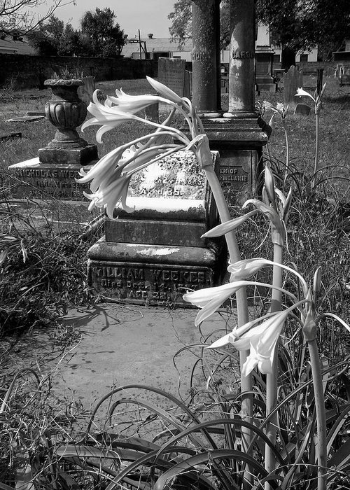 Graveyards Greeting Card featuring the photograph Flower Old Grave by Floyd Smith