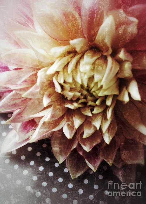 Dahlia Greeting Card featuring the photograph Flower On Black And White Polka Dots by Ruby Hummersmith