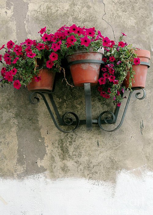 Flower Greeting Card featuring the photograph Flower Pots On Old Wall by Mike Nellums
