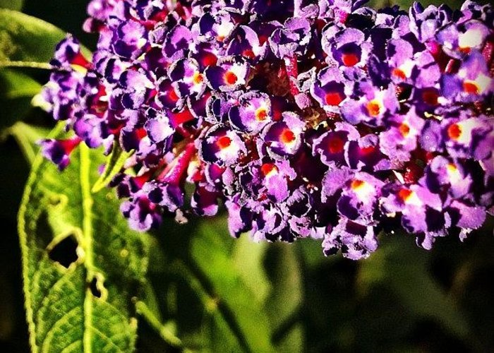 #flower #pretty #love #beautiful #yolo Greeting Card