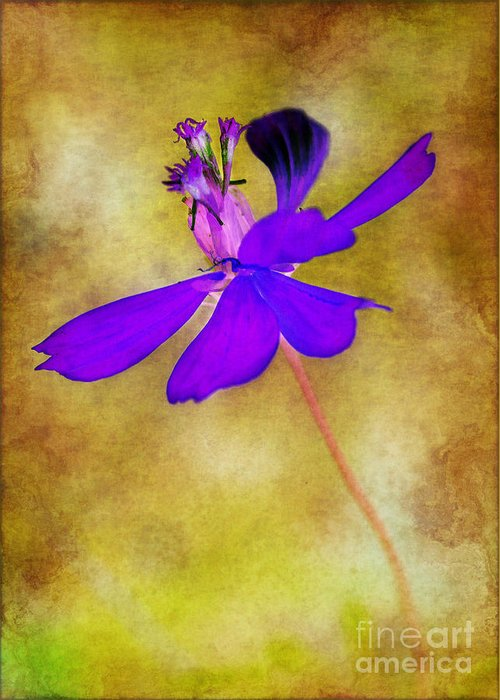 Flower Greeting Card featuring the photograph Flower Take Flight by Judi Bagwell