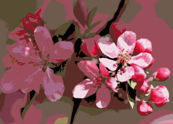 Flower Greeting Card featuring the photograph Flowering Crabapple Posterized by Mark J Seefeldt