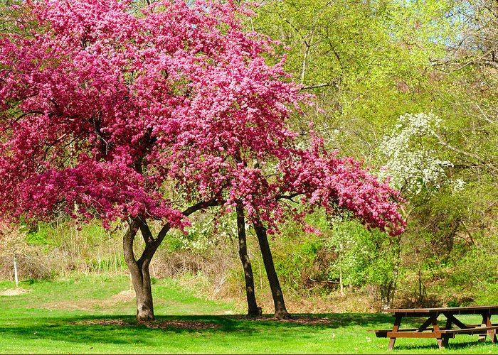 Tree Greeting Card featuring the photograph Flowering Tree by Kenneth Sponsler