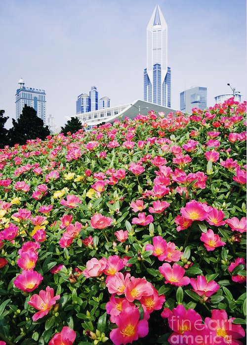 Architecture Greeting Card featuring the photograph Flowers And Architecture Around Peoples Square by Jeremy Woodhouse
