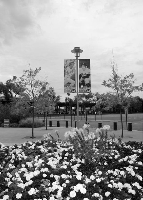 Shea Stadium Greeting Card featuring the photograph Flowers At Citi Field In Black And White by Rob Hans