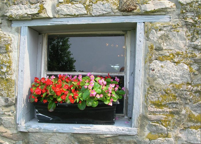 Window Greeting Card featuring the photograph Flowers With A View by Alan Rutherford