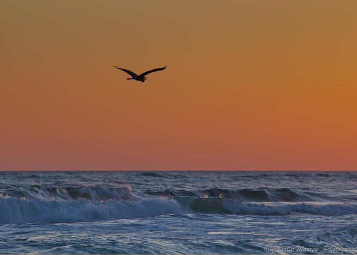 Beach Greeting Card featuring the photograph Fly By by Charles Warren