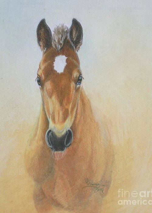Colored Pencil Greeting Card featuring the drawing Foal Study by Carrie L Lewis