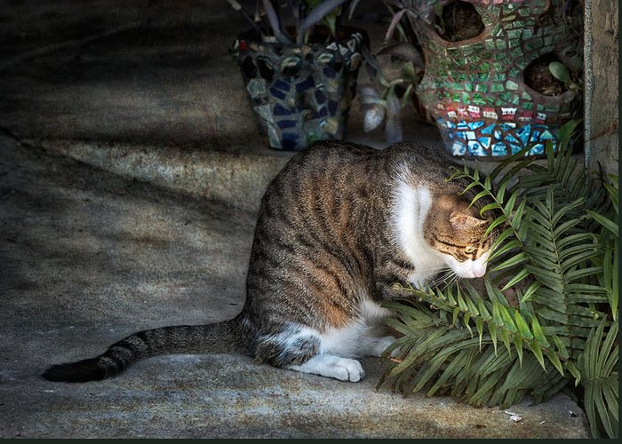 Cat Greeting Card featuring the photograph Focus by Brenda Bryant