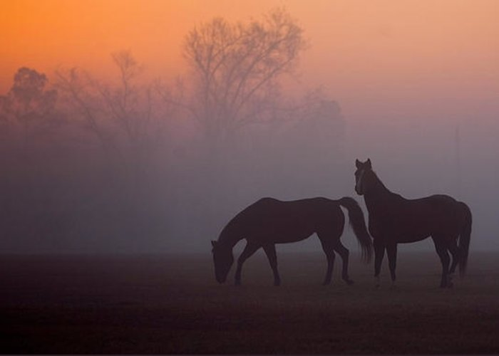 Animals Greeting Card featuring the photograph Foggy Morning by Janice M LeCocq