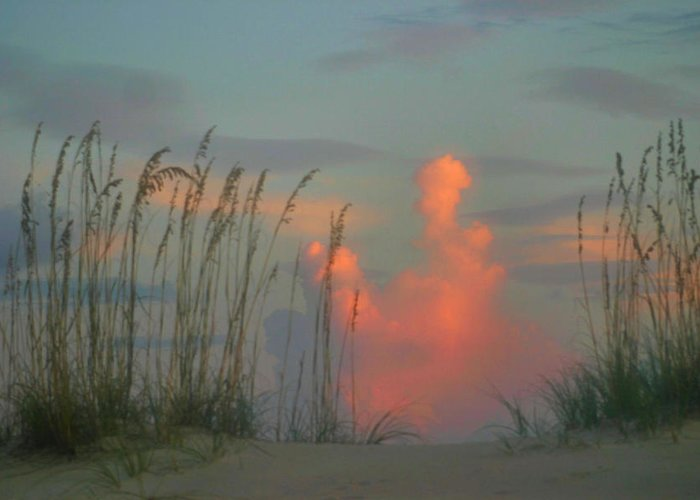 Sea Oats Greeting Card featuring the photograph Foggy Oats by Kristin Elmquist