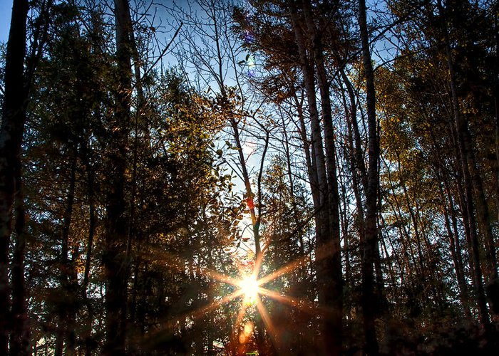 Sun Greeting Card featuring the photograph Follow The Sun by Gary Smith