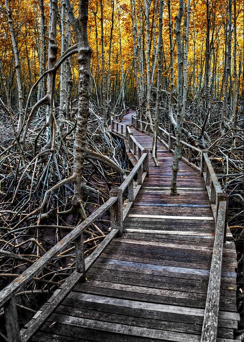 Area Greeting Card featuring the photograph Footpath In Mangrove Forest by Adrian Evans
