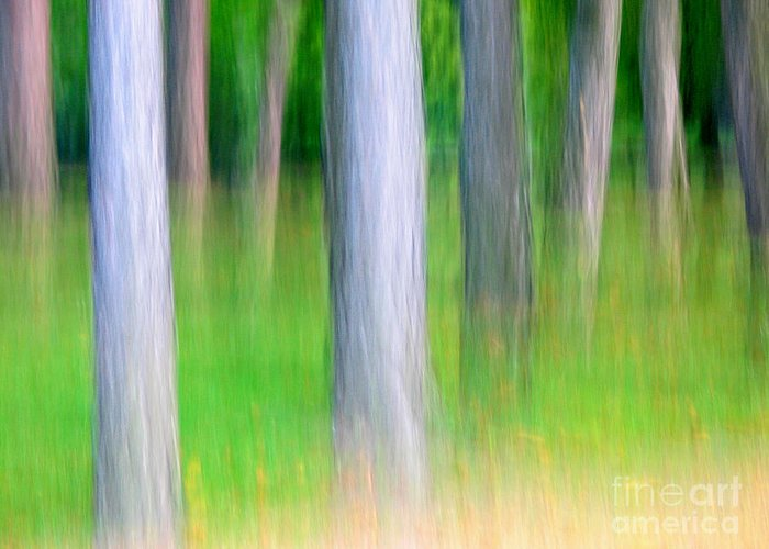 Nature Greeting Card featuring the photograph Forest Abstract by Odon Czintos