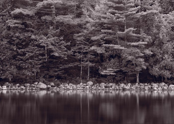 Maine Greeting Card featuring the photograph Forest At Jordan Pond Acadia Bw by Steve Gadomski