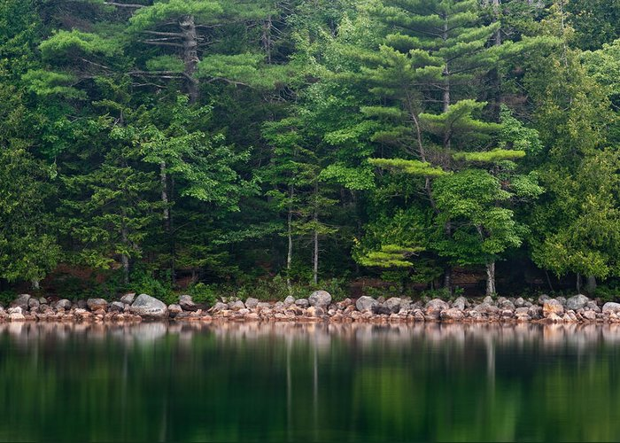 Maine Greeting Card featuring the photograph Forest At Jordan Pond Acadia by Steve Gadomski