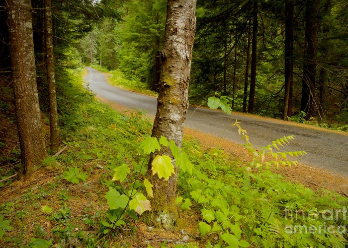 Coeur D'alene National Forest Greeting Card featuring the photograph Forest Escape by Idaho Scenic Images Linda Lantzy