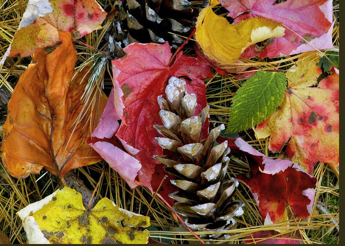 Fall Colors Greeting Card featuring the photograph Forest Floor Portrait by Rich Franco