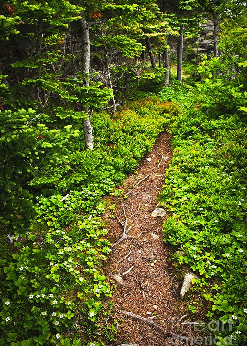 Forest Greeting Card featuring the photograph Forest Path In Newfoundland by Elena Elisseeva