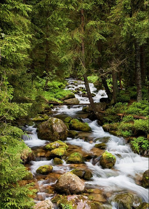 Beautiful Greeting Card featuring the photograph Forest Stream In Tatra Mountains by Artur Bogacki