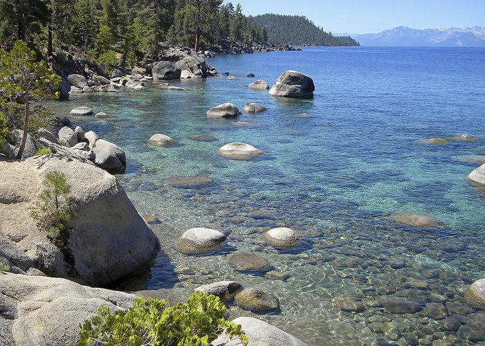 Lake Tahoe Greeting Card featuring the photograph Forested Shores Of Lake Tahoe by Frank Wilson