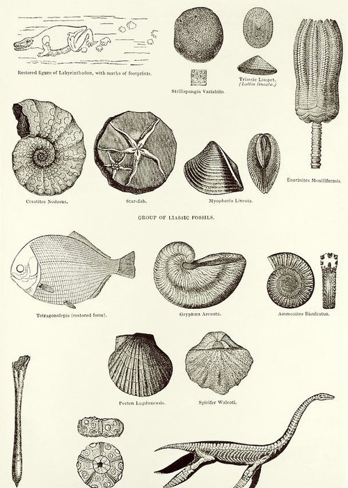 Fossils Greeting Card featuring the photograph Fossils by Sheila Terry