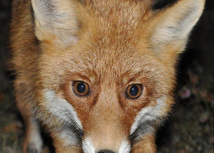 Fox Greeting Card featuring the photograph Fox by Alexa Alexandru-Michael