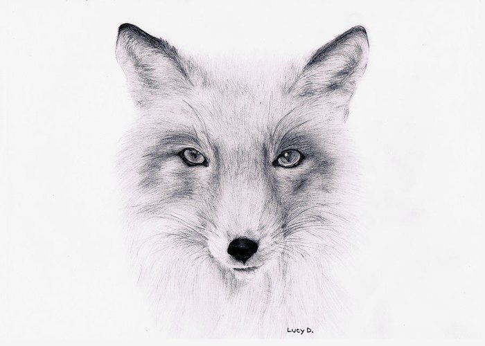 Fox Greeting Card featuring the drawing Fox by Lucy D