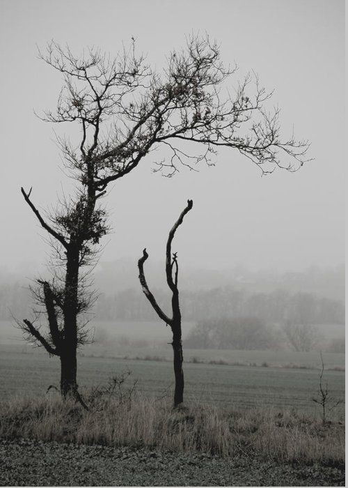 Trees Greeting Card featuring the photograph Frail Sentinels by Odd Jeppesen