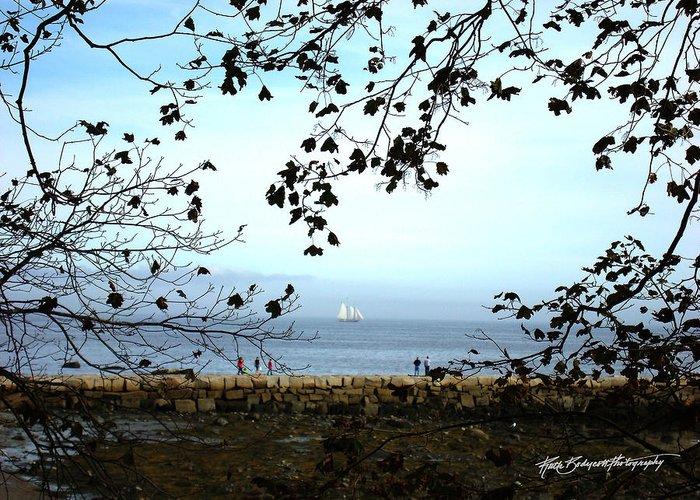 Landscape Greeting Card featuring the photograph Framed On Penobscot Bay by Ruth Bodycott