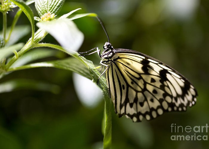 Butterfly Greeting Card featuring the photograph Fred by Leslie Leda