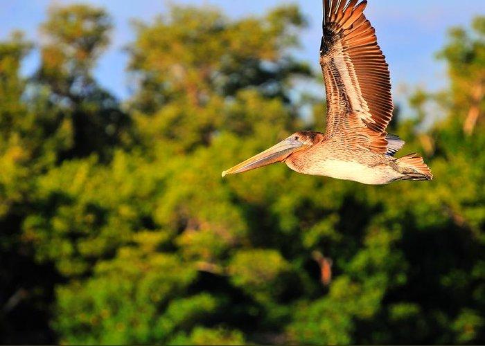 Crowned Night Heron Greeting Card featuring the digital art Free Flight by Barry R Jones Jr