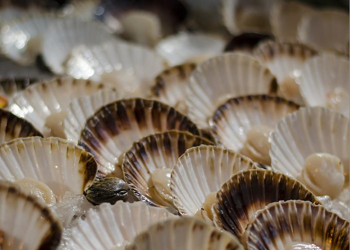 Scallops Greeting Card featuring the photograph Fresh From The Sea by Heather Applegate