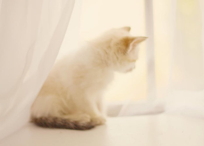 Kitten Greeting Card featuring the photograph Fresh Wonder by Amy Tyler