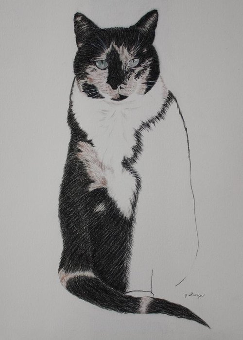 Spirit Cat Essence Drawings Greeting Cards