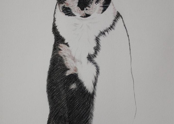 Spirit Cat Essence Greeting Card featuring the drawing Friend II by Patsy Sharpe