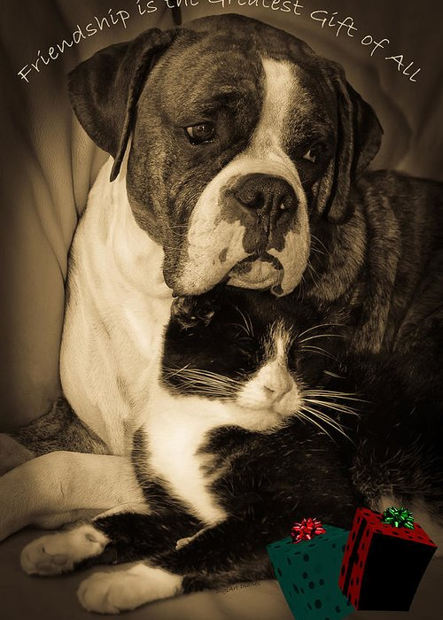 Boxer Greeting Card featuring the photograph Friendship Is The Greatest Gift Of All Greeting by DigiArt Diaries by Vicky B Fuller