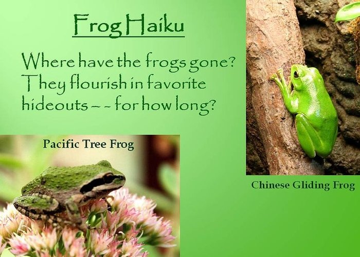 Chinese Gliding Frog Greeting Card featuring the photograph Frog Haiku by Laurel Talabere