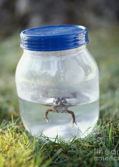 1 Greeting Card featuring the photograph Frog In A Jar by Adam Crowley