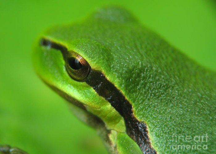 Nature Greeting Card featuring the photograph Frog Look by Odon Czintos