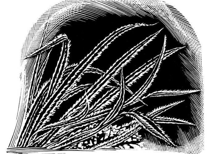 Ice Greeting Card featuring the photograph Frost On Blades Of Grass, Woodcut by Gary Hincks