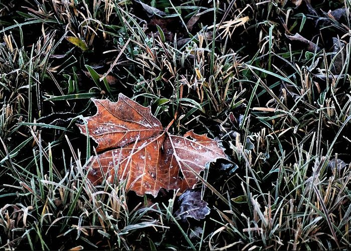 Leaf Greeting Card featuring the photograph Frosted Leaf by Andrew Mroz