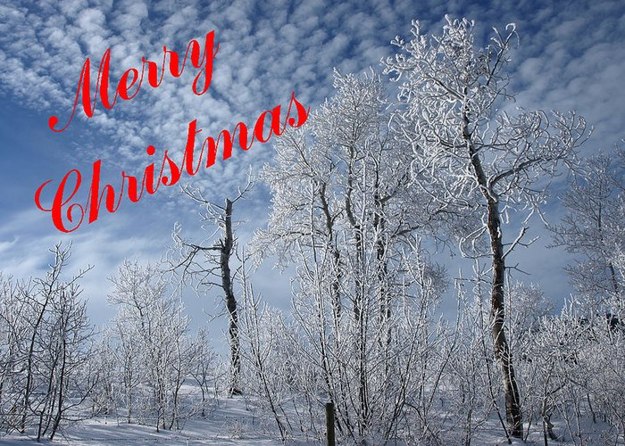 Christmas Cards Greeting Card featuring the photograph Frosted Trees Christmas by DeeLon Merritt