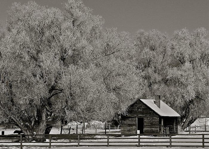 Frosted Greeting Card featuring the photograph Frosty Day by Eric Tressler
