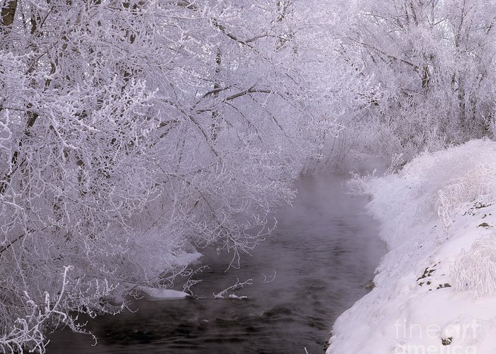 Oregon Greeting Card featuring the photograph Frosty Trees And Creek by John Barger