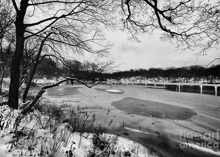 Cold Greeting Card featuring the photograph Frozen Central Park At Dusk by John Farnan